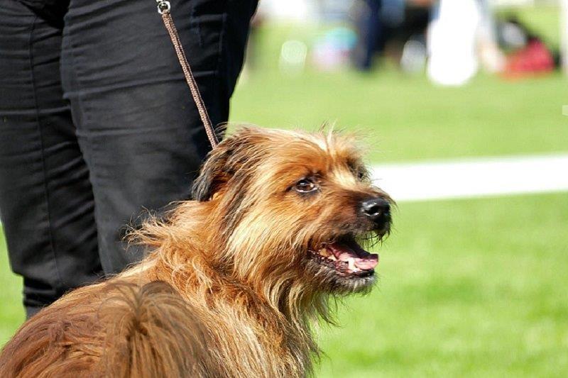 Hunde70