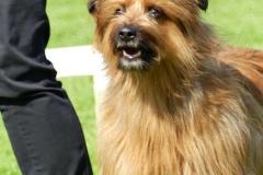 Hunde30